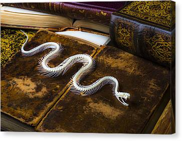 Snake Skeleton And Old Books Canvas Print by Garry Gay