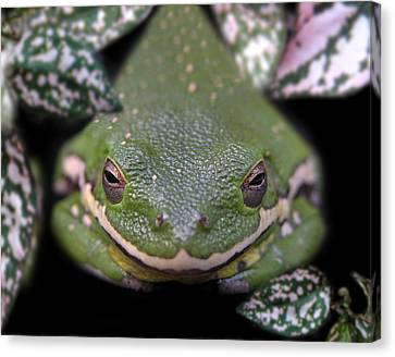 Snakefrog Canvas Print by Joseph Tese