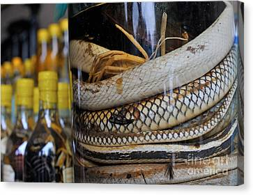 Snakes In Snake-flavoured Alcohol Bottles  Canvas Print by Sami Sarkis