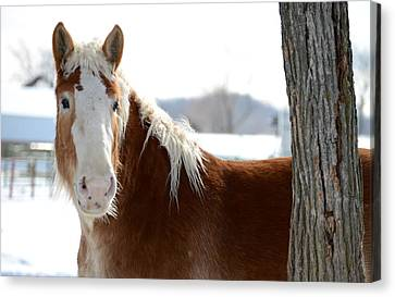 Canvas Print featuring the photograph Sneak Peek by Linda Mishler