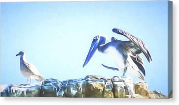 Sneaky Pelican Art Canvas Print