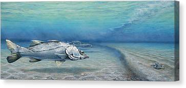 Snook Waiting Perch Watching Canvas Print