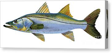 Speckled Trout Canvas Print - Snook by Carey Chen