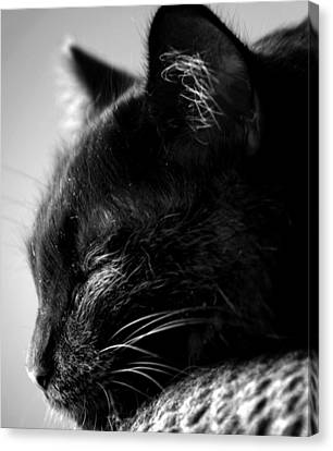 Sleeping Cat Canvas Print - Snooze by Camille Lopez