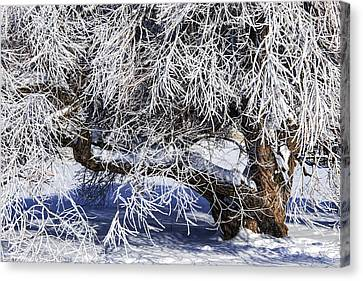 Snow And Ice Covered Tree Canvas Print by Randall Nyhof