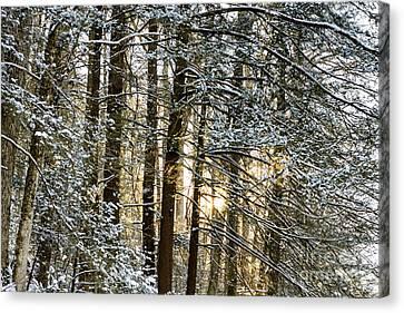 Snow And Setting Sun Canvas Print by Thomas R Fletcher