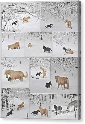 Snow Angels Paso Fino Style Canvas Print by Patricia Keller
