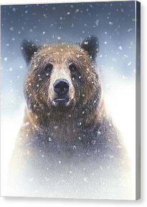 Snow Bear Canvas Print by Robert Foster