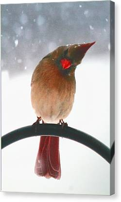 Snow Bird Canvas Print by Diane Merkle