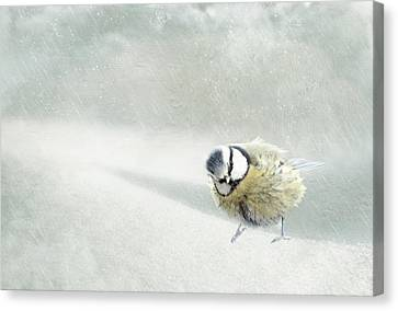 Snow Bird Canvas Print by Heike Hultsch