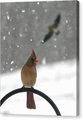 Snow Bird II Canvas Print by Diane Merkle