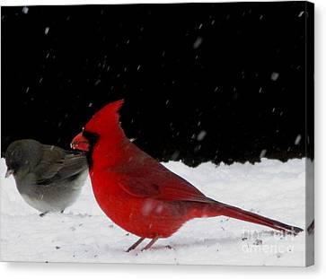 Snow Birds Canvas Print