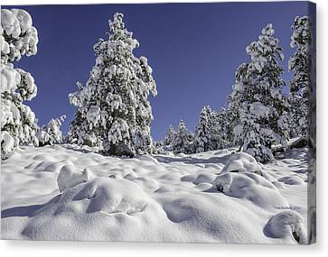 Snow Bomb Canvas Print by Tom Wilbert