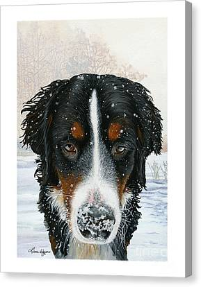 Snow Bumper Canvas Print by Liane Weyers