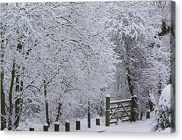 Snow Canopy Canvas Print by David Birchall