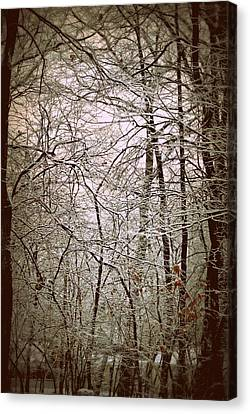 Snow Cover Forest Canvas Print