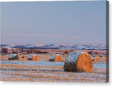 Canvas Print featuring the photograph Snow Covered Bales by Scott Bean