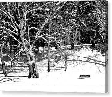 Snow Covered Bench Canvas Print