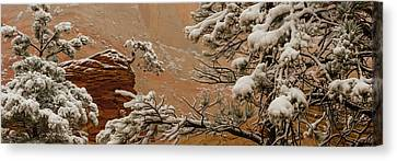 Snow Covered Branches Of Ponderosa Pine Canvas Print by Panoramic Images