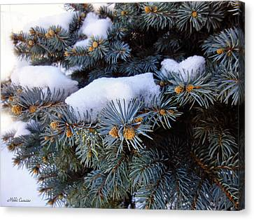 Snow Covered Spruce Canvas Print by Mikki Cucuzzo