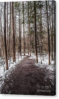 Canvas Print featuring the photograph Snow Covered Trail by Debbie Green