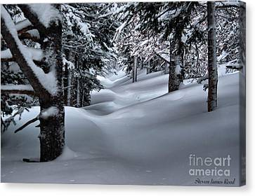 Canvas Print featuring the photograph Snow Covered Trail by Steven Reed