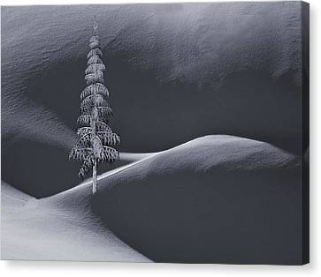 Mountain Cabin Canvas Print - Snow Covered Tree And Mountains Bw by David Dehner