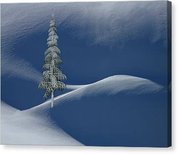 Mountain Cabin Canvas Print - Snow Covered Tree And Mountains Color by David Dehner