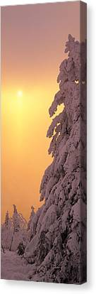 Snow Covered Tree In Winter At Sunset Canvas Print by Panoramic Images