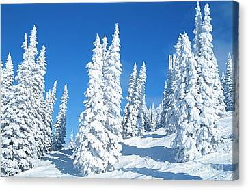 Snow Covered Trees Colorado Canvas Print