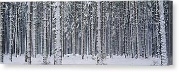 Snow Covered Trees In A Forest, Austria Canvas Print by Panoramic Images