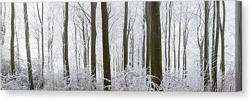 Snow Covered Trees In A Forest, Wotton Canvas Print by Panoramic Images
