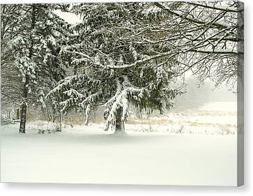 Canvas Print featuring the photograph Snow-covered Trees by Lars Lentz