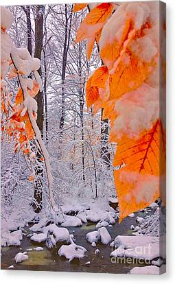 Snow Covered Woods And Stream Canvas Print by Todd Breitling