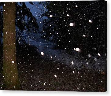 Snow Dance Canvas Print by Steve Battle