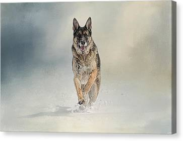 Snow Day For The Shepherd Canvas Print by Jai Johnson