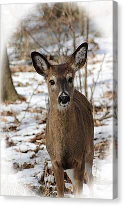 Canvas Print featuring the photograph Snow Deer by Lorna Rogers Photography