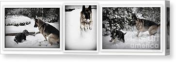 Canvas Print featuring the photograph Snow Dogs. Triptich by Tanya  Searcy