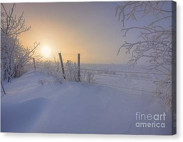Snow Drifts And Barbed Wire Canvas Print by Dan Jurak