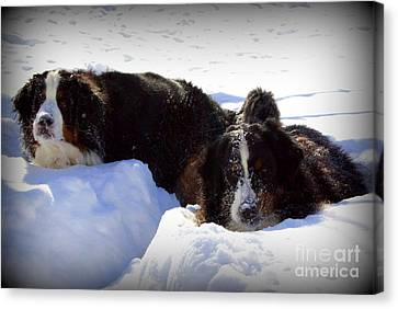 Dog At Play Canvas Print - Snow Eaters by Patti Whitten