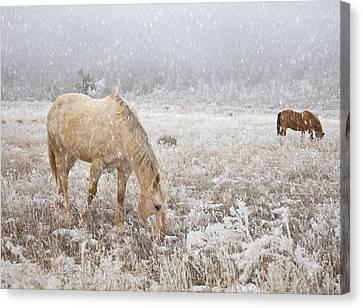 Snow Falling On Horses Canvas Print by Theresa Tahara
