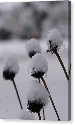 Snow Flowers Canvas Print by Brian Jones
