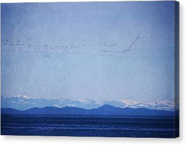 Canvas Print featuring the photograph Snow Geese Over The Ocean by Peggy Collins