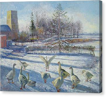 Snow Geese, Winter Morning Canvas Print by Timothy Easton