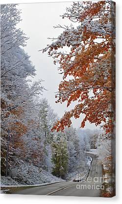 Fall Trees Canvas Print - Snow In Autumn 22 by Terri Gostola
