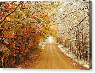 Fall Leaves Canvas Print - Snow In Autumn 40 by Terri Gostola