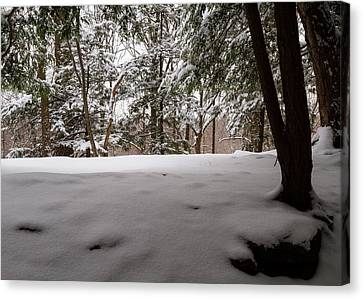 Snow In Shade  Canvas Print by Tim Fitzwater