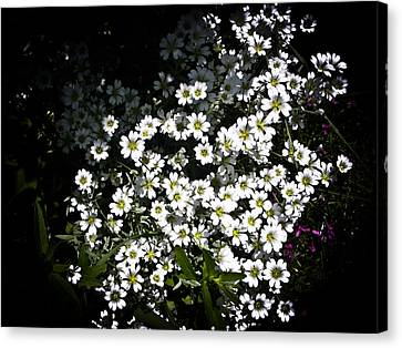 Canvas Print featuring the photograph Snow In Summer by Joann Copeland-Paul