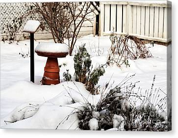 Snow In The Garden Canvas Print by John Rizzuto