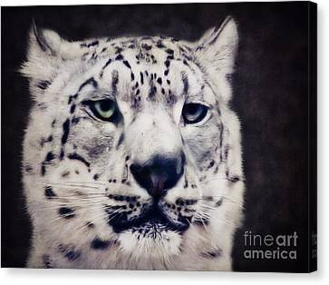 Snow Leopard Canvas Print by Angela Doelling AD DESIGN Photo and PhotoArt